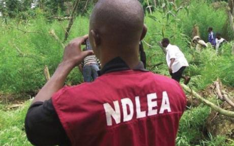 NDLEA arrests 386 persons for drug peddling in Plateau