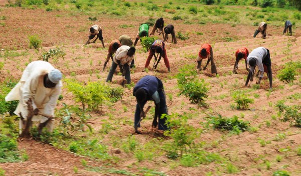 World Bank to support Nigeria's agricultural sector with $200 million
