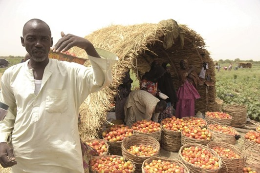 'Attract youth to farming in Nigeria to fight extremism'