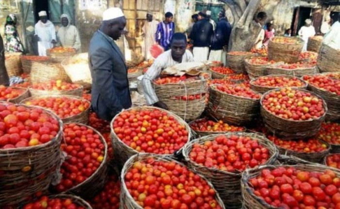 Shortfall in tomato production now 700,000MT, says NIHORT
