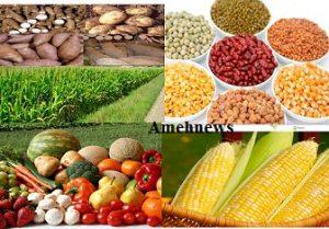 Nigeria Risks Food Crisis over COVID-19, Agric Bureau Warns