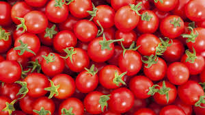 Erisco, Asian firms plan tomato factory in Katsina