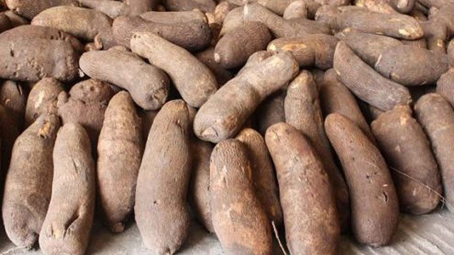 Stakeholders Urges FG To Sign Free Duty Trade Agreement With EU To Boost Yam Exports