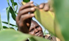 Drought to curb Kenya's 2019 economic growth- World Bank