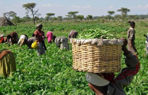 Firm lifts farmers with N4.3b