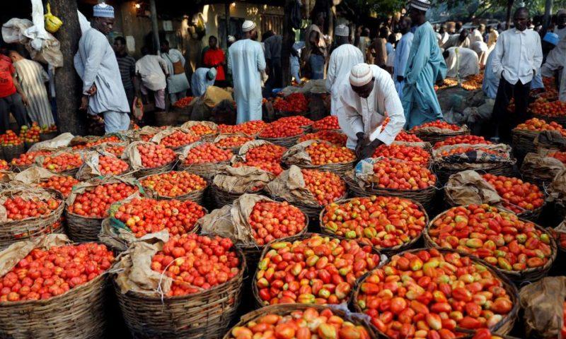 Nigerians to access N120 billion tomato market