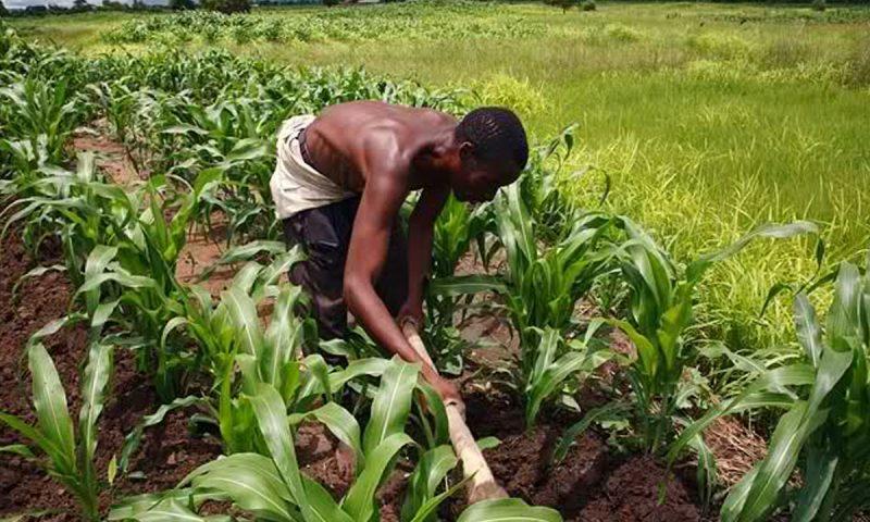 Boko Haram, herdsmen undermining agric sector, says World Bank