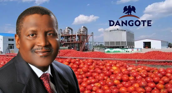 Dangote Farms commissions tomatoes nursery to provide seedlings for farmers